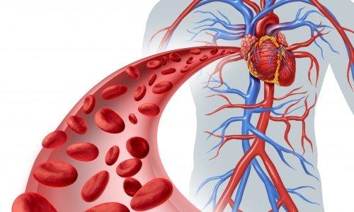 Актовегин улучшает транспортировку кислорода и его усвояемость