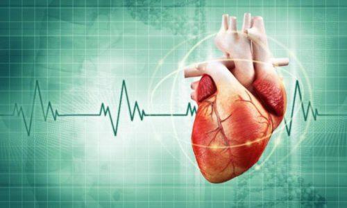 Негативное влияние быстрого ритма жизни неизбежно накладывает отпечаток на здоровье человека, в том числе здоровье сердечно-сосудистой системы