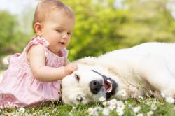 Шерсть животных - причина проявления аллергического ринита