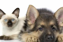 Забота о животных - хорошее лекарство от стрессов