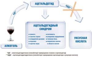 схема действия цианамида