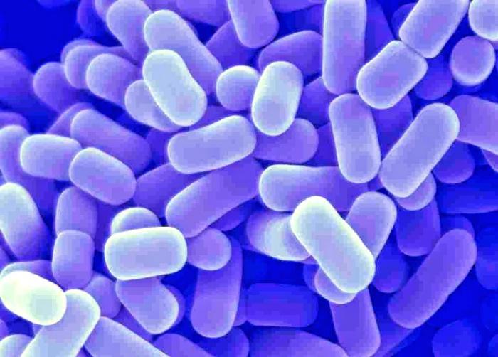 Лакто и бифидобактерии