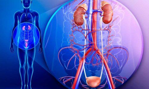 Урология изучает патологии мочевыделительной системы человека, их причины, симптомы, методы лечения и способы профилактики