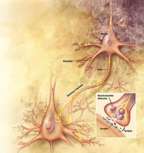 Нейромедиатор ацетилхолин