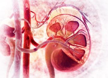 Возможна ли полноценная жизнь после пересадки почки и какая продолжительность жизни?