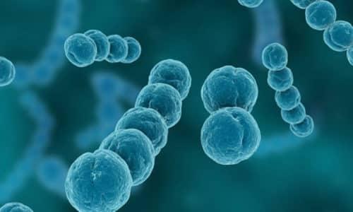 Главной причиной цистита у мальчиков является стрептококковая/стафилококковая инфекция